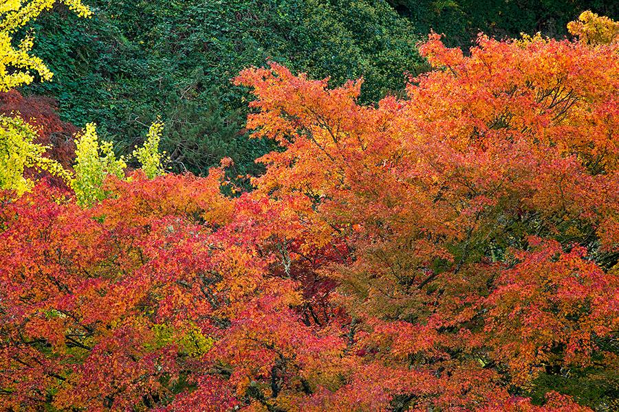 autumn_4